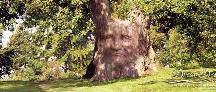DreamDesigner-Legamantul-stejarului